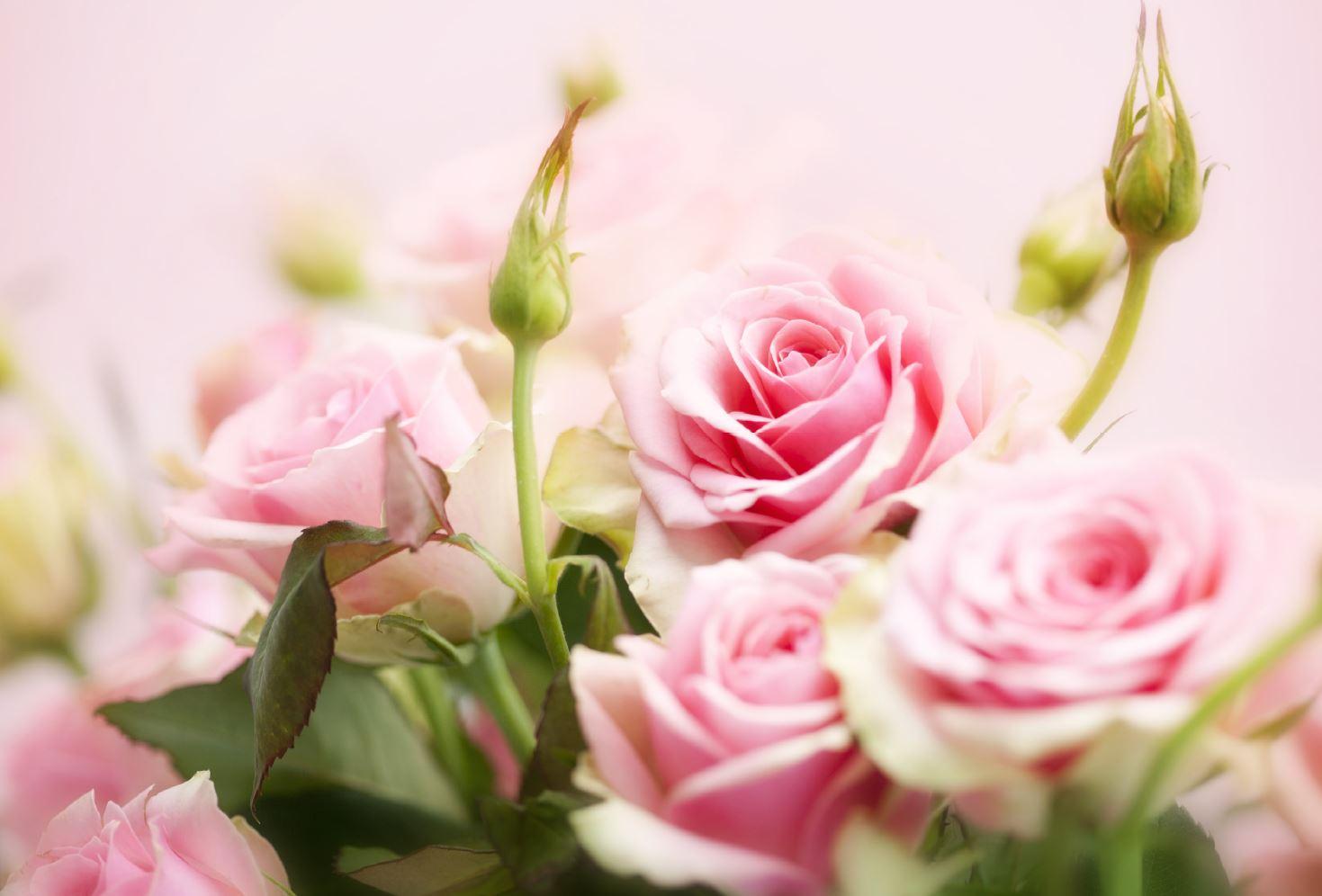 Lahjakortti ruusut